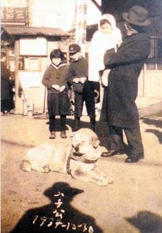 hachiko: 31 thousand results found on Yandex. Japanese Akita, Japanese Dogs, Hachiko Dog, Hachi A Dogs Tale, Schnauzer, Japanese Dog Breeds, A Dog's Tale, Dog Died, Dog Heaven
