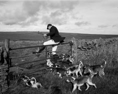 Hunting hare with beagles. English Country Style, English Countryside, Country Life, Vintage Photography, Street Photography, Ian Berry, Northern Exposure, Northern England, North Country