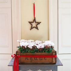 Fancy a change from the Christmas poinsettia?  Plant white cyclamen in a rustic wooden crate and place on a side table. Tie a festive red ribbon around the crate and finish with an oversized, long bow.....