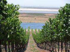 Bouchaine Vineyards, Carneros, Napa