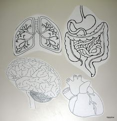Anatomy printables