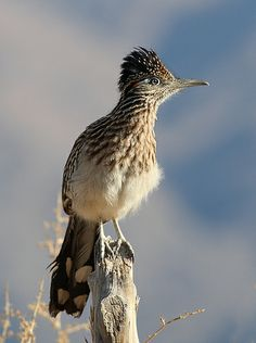 Road Runner. I always want to wash their hair because it looks oily. LOL