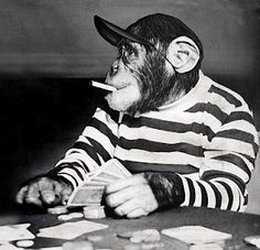 Monkeys have been playing poker since black & white.