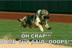 Cop Humor<<Cop dogs are just fun. Funny Dog Memes, Funny Animal Memes, Cute Funny Animals, Funny Animal Pictures, Dog Pictures, Funny Dogs, Cute Dogs, Dog Funnies, Funny Quotes