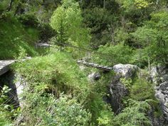 Mariazell Online   Ötschergräben Austria, Mountains, Nature, Plants, Travel, Hiking Trails, Alps, Hiking, Vacation