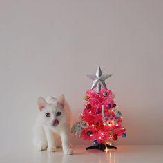 Zappa, Cats Of Instagram, Instagram Posts, My Animal, Turkey, Christmas Ornaments, Holiday Decor, Festive, Animals