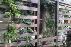 disguise a garden wall - Google Search