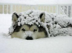 Sniff.  I miss Sasha dog.