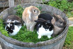 barrel of bunnies