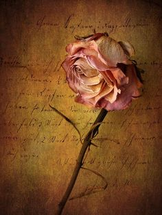 From: Fine Art America, please visit Belle Image Nature, Nature Verte, Drying Roses, Rose Crafts, Decoupage Vintage, Vintage Paper, Image Hd, Book Of Shadows, Paper Background