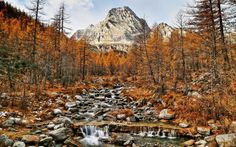 Download wallpapers autumn, mountain landscape, yellow woods, mountains, mountain river