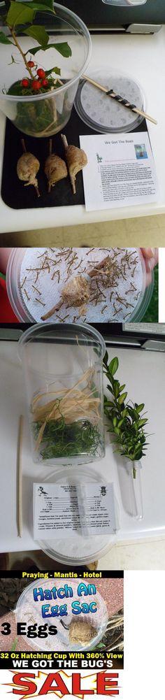 Insects And Bug Habitats 158699 3 Large Praying Mantis Egg Case