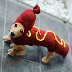 Wonderful Facts About Dachshund That Will Make You Fall In Love With Them Even More - Trendy Woof Dachshund Costume, Dachshund Funny, Dachshund Puppies, Dachshund Love, Cute Puppies, Cute Dogs, Dogs And Puppies, Daschund, Weiner Dog Costume