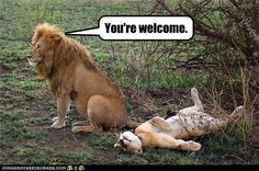 Funny pictures about Alpha male. Oh, and cool pics about Alpha male. Also, Alpha male photos. Friday Funny Pictures, Funny Animal Pictures, Funny Photos, Funny Animals, Sports Pictures, Haha Funny, Funny Memes, Funny Stuff, Freaking Hilarious