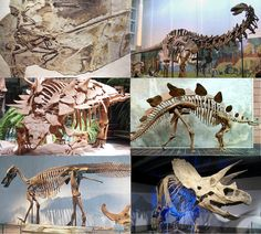 Why doesn't the Bible mention the Dinosaurs? - Amazing Bible Timeline with World History Dinosaur Facts For Kids, Dinosaur Images, Mormon Beliefs, Bible Timeline, Bible Questions, Dinosaur Skeleton, Dinosaur Fossils, Vertebrates, Science And Nature