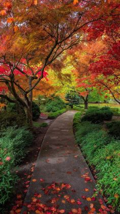 autumn The post autumn autumn scenery appeared first on Trendy. Fall Pictures, Nature Pictures, Pretty Pictures, Beautiful World, Beautiful Places, Beautiful Beautiful, Outdoor Trees, Autumn Scenes, Jolie Photo