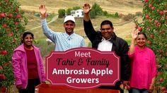 Meet Your BC Ambrosia Apple Growers  - Tahir Raza