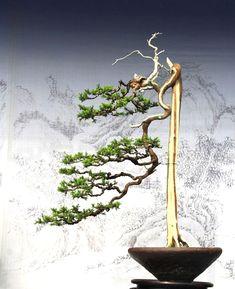 ♦☺I simply love this cute #bonsai tree!ᴥ♦       #BonsaiInspiration