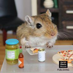 PIZZA? - Mocha #gerbil #dollhouse #miniature #miniatures #mini #pizza #rement #dollshouse #gerbilsofinstagram #rodentsofinstagram #rodent