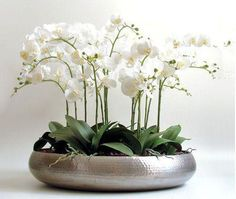Витаминный коктейль для орхидей: как реанимировать орхидею Landscape Design, Garden Design, Orchid Show, Succulent Centerpieces, Foyer Design, Small Farm, Diy Wreath, Plant Decor, Horticulture