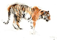 Wildlife Artist in Residence for RZSS Watercolor Tiger, Tiger Painting, Watercolor Animals, Watercolor Paintings, Watercolors, Animal Paintings, Animal Drawings, Art Drawings, Tiger Art