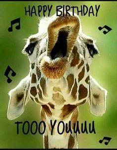 happy birthday funny / happy birthday wishes + happy birthday + happy birthday wishes for a friend + happy birthday funny + happy birthday wishes for him + happy birthday sister + happy birthday quotes + happy birthday greetings Funny Happy Birthday Images, Happy Birthday Wishes Cards, Card Birthday, Birthday Invitations, Happy Birthday For Him, Humor Birthday, Funny Birthday Quotes, Giraffe Happy Birthday, Sister Birthday