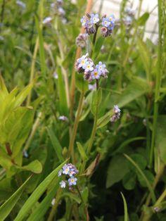 Flowers purple little in the garden