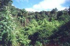 conozcan los bosques tropicales mas ricos en naturaleza. La cultura peruana es resultado del mestizaje inicial entre la civilización andina, la tradición ...