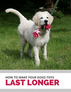 How to make your dog