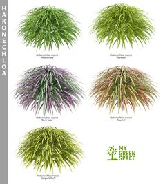 Patio Shade Ideas Grass 47 New Ideas Garden Shrubs, Landscaping Plants, Front Yard Landscaping, Garden Plants, Outdoor Plants, Outdoor Gardens, Do It Yourself Garten, No Grass Backyard, Japanese Garden Design