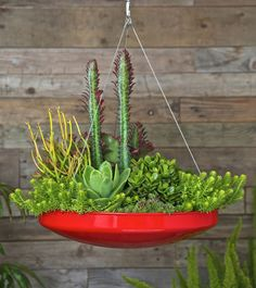 Bright red colourful Hanging Plant Pot, so bloomin cool you can grow some herbs in them and hang them inside.