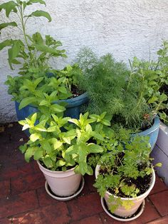 Tips on using your fresh herbs