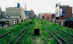 The Highline- one of the prettiest places in the world.  A garden growing over old railroad tracks up above NYC. Perfect view of the city, so many flowers and birds!