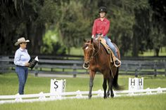 Learn How to Ride a Western Dressage Test with Lynn Palm