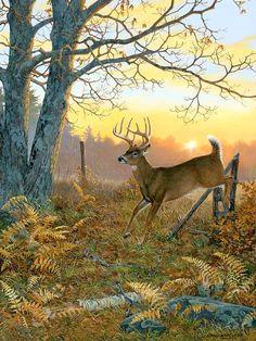 Wildlife Paintings, Wildlife Art, Animal Paintings, Deer Paintings, Whitetail Deer Pictures, Deer Photos, Deer Pics, Tier Wallpaper, Animal Wallpaper