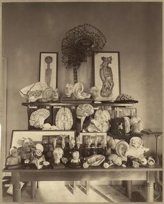 Anonymous. 1892. Harvard Psychological Laboratory in Dane Hall- Display of Wax Models. Photograph. (Harvard University Archives – HUPSF Psychological Laboratories (4))  (via: billyjane: ajourneyroundmyskull)