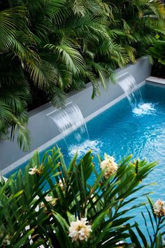 intimate relaxed pool courtyard was designed in house. A Sydney family was after a tropical hideaway within the grounds of their weekender. The landscape Tropical Pool Landscaping, Tropical Garden Design, Tropical Backyard, Backyard Pool Designs, Small Backyard Pools, Modern Landscaping, Outdoor Landscaping, Outdoor Pool, Landscaping Ideas