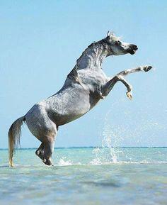 Un beau cheval.