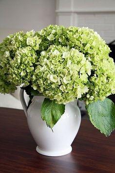 Hortensia Hydrangea, Limelight Hydrangea, Hydrangea Flower, Hydrangea Bloom, White Hydrangeas, Deco Floral, Arte Floral, Ikebana, Green Flowers
