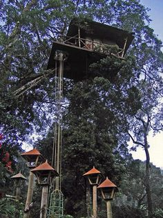 Fancy Tree House with an elevator...cool