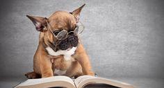 Une étude affirme que vous pouvez vivre plus longtemps si vous lisez beaucoup de livres