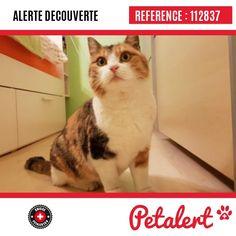 Cette Alerte est désormais close : elle n'est donc plus visible sur la plate-forme www.petalert.ch. L'émetteur de cette Alerte ne s'est plus manifesté, malgré nos relances. Merci pour votre aide. Visible, Aide, Cats, Animals, Switzerland, Thanks, Shape, Gatos, Animales