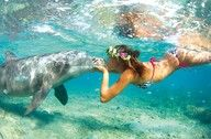 I want to Swim with the Dolphins!!