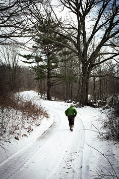 By the late there hadn't been wild turkeys in New Hampshire for more than a century. Then wildlife biologist Ted Walski came along. I Love Winter, Winter Snow, Wildlife Biologist, Winter Road, Wild Turkey, New Hampshire, Winter Wonderland, Nativity, Weather
