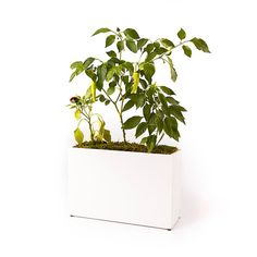 Glossy White Planter Self-Watering Self-Feeding by ModernSprout