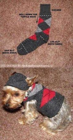Dog sweater made out of a sock. Omg how tiny must this dog be?!