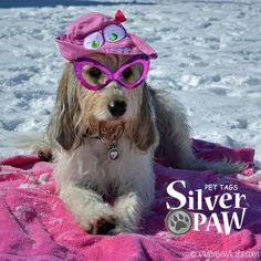 Bathing Beauty wearing her Silver Paw Tag www.silverpawtags.com