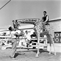 LIFE at the Circus: Behind the Scenes With Ringling Brothers, 1949 | LIFE.com