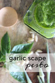 Cheesy garlic bread, Pull apart and Garlic bread on Pinterest