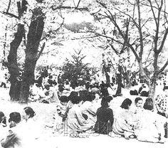 [포토섹션]60년대 창경궁 벚꽃 나들이